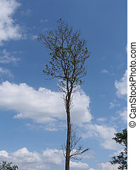 Perrennial Plant with blue sky background