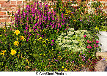 Perennial Plants in a flowerbed. - Perennial Plants like...