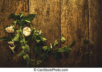 Perennial vine flower romantic background