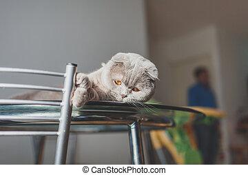 perezoso, gato, acostado, en, un, tabla de cocina