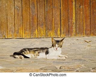 perezoso, gato
