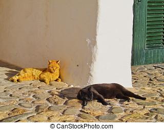 perezoso, gatos