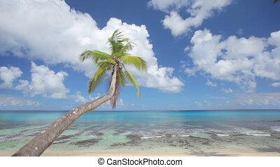 amazing view at palmtree on wonderful lagoon with audio