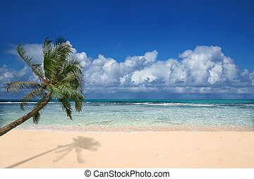 Perfect Beach in Hawaii - Palm Tree Overlooking Pristine...