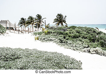Perfect Caribbean beach in Tulum Mexico