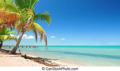 Perfect Caribbean Blue Sea and a Palm Tree - Vibrant...