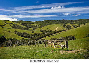 Green fields and rolling hills in New Zealand