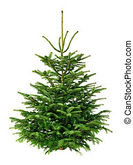Studio shot of a fresh gorgeous fir tree for Christmas, without ornaments, isolated on pure white