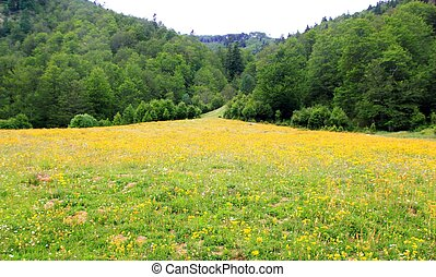 Perfect flowers meadow in trees mountain