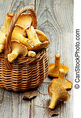 Perfect Raw Chanterelles in Wicker Basket Cross Section on Rustic Wooden background