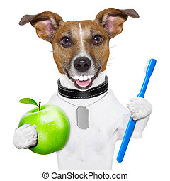 perfect smile dog - dog with big white teeth with an apple...