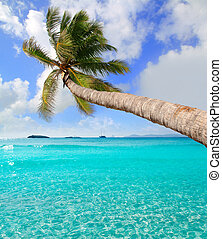 perfecto, árbol tropical, ibiza, escamotee playa