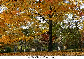 perfecto, ajuste, otoño