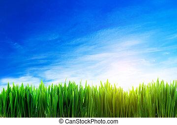 perfecto, campo de la hierba, naturaleza, plano de fondo