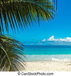 perfecto, playa., isla, vacaciones, tropical, fondo.