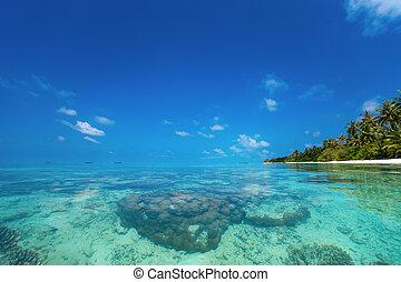 perfeitos, ilha tropical, paraisos , praia