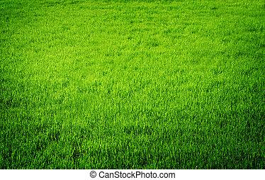perfekt, frisk, gräs