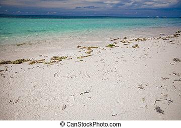 perfekt, tropical strand, med, turkos, vatten