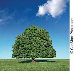 perfetto, blu, albero, cielo