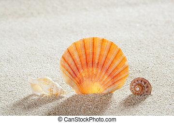 perfetto, estate, conchiglia, vacanza, tropicale, sabbia, spiaggia