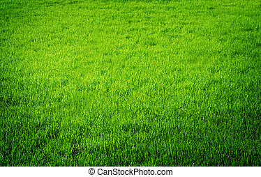perfetto, fresco, erba