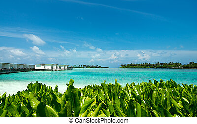 perfetto, isola tropicale, paradiso