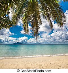 perfetto, spiaggia., isola, vacanza, tropicale, fondo.