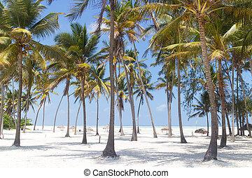 perfetto, zanzibar, paje, tanzania, albero, palma, spiaggia bianca, sabbioso