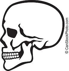 perfil, cráneo humano