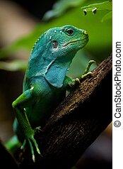 perfil, fiji, árbol, salvado, iguana