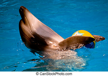 performing dolphin