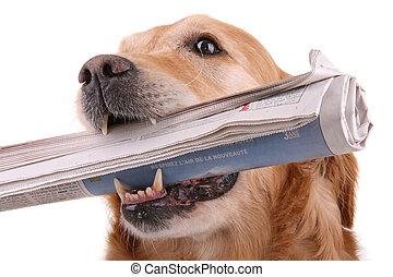 periódico, perro