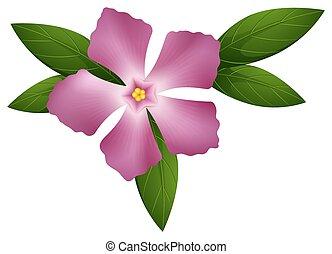 Periwinkle flower in pink color illustration