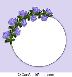 Periwinkle flowers line in a corner of white and blue...