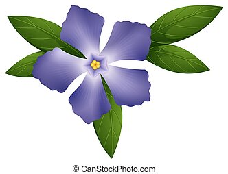 Periwinkle in blue color illustration