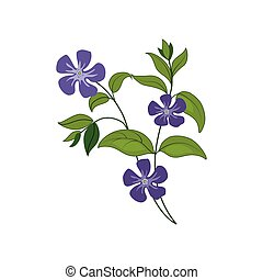 Periwinkle Wild Flower Hand Drawn Detailed Illustration....
