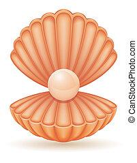 perla, conchiglia, vettore, illustrazione