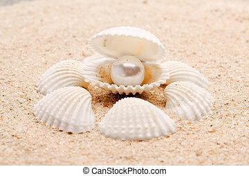 perla, su, il, seashell