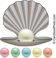 perles, coquille