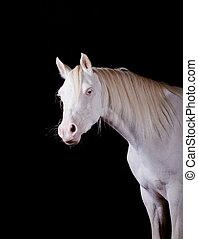 horse indoors - perlino miniature horse indoors