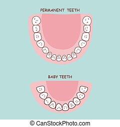 permanent teeth and baby teeth
