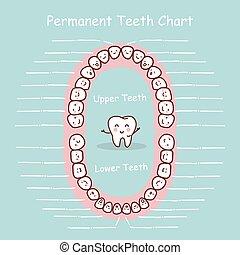 permanenter zahn, tabelle, aufzeichnen