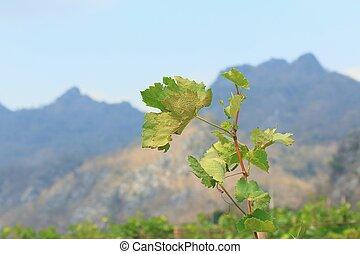 permisos de uva