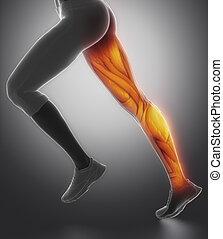 perna, femininas, músculo, anatomia, vista lateral