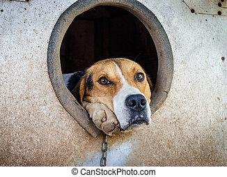 perrera, perro, cadena, triste