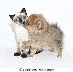 perrito, besos