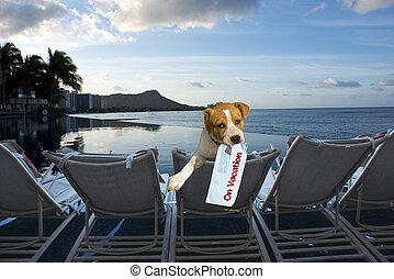 perrito, en, vacation.
