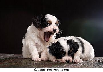perrito, es, reír