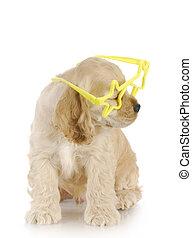 perrito, llevando gafas