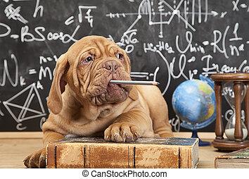 perrito, mascar, un, lápiz
